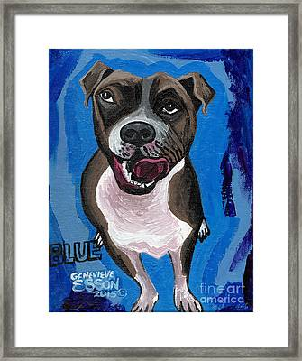 Blue The Pit Bull Terrier Framed Print