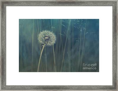 Blue Tinted Framed Print by Priska Wettstein