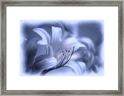 Blue Tinted Swirl Lily Framed Print by Jim  Darnall