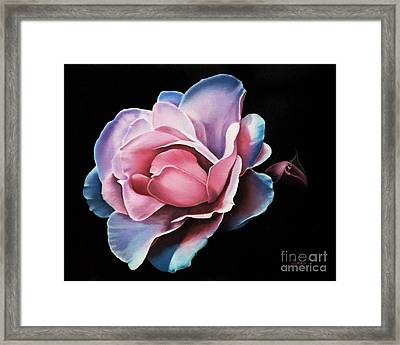 Blue Tipped Rose Framed Print
