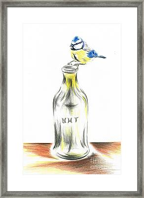 Blue Tit Loves The Cream Framed Print
