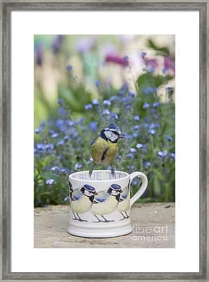 Blue Tit Mug Framed Print by Tim Gainey