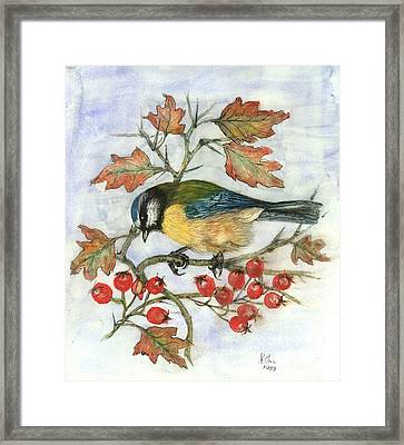 Blue Tit On Hawthorn Framed Print by Nell Hill