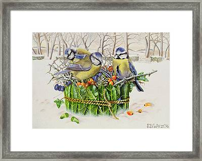 Blue Tits In Leaf Nest Framed Print