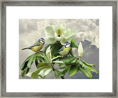 Blue Tits In Magnolia Tree Framed Print by IM Spadecaller
