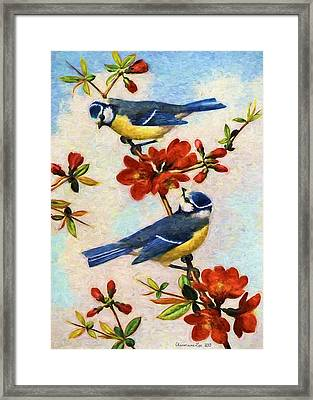 Blue Tits On Quince Flowers Framed Print by Charmaine Zoe