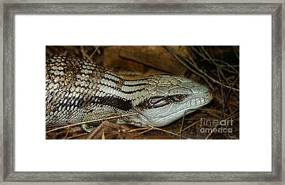 Blue Tongue Lizard By Kaye Menner Framed Print by Kaye Menner