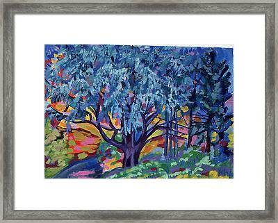 Blue Tree Far Country Framed Print