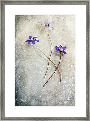 Blue Trio Framed Print by Randi Grace Nilsberg