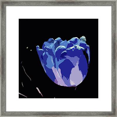 Blue Tulip Framed Print by James Hill