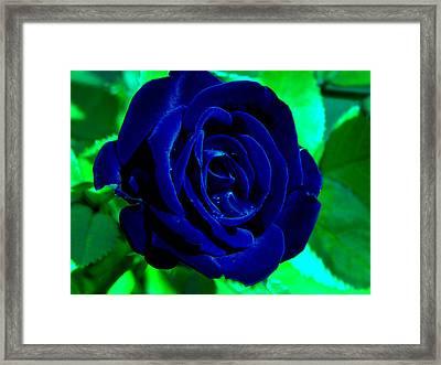 Blue Velvet Rose Framed Print