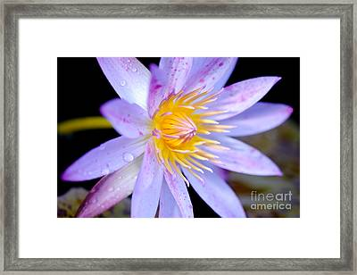 Blue Water Lily Framed Print by Eyzen M Kim
