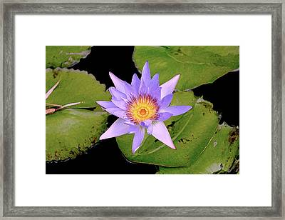 Blue Water Lily Framed Print