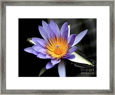 Blue Water Lily Pond Flower . 7d5726 Framed Print by Wingsdomain Art and Photography