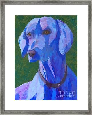 Blue Weimaraner Framed Print
