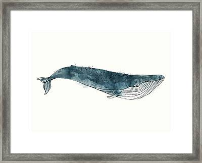 Blue Whale From Whales Chart Framed Print by Amy Hamilton
