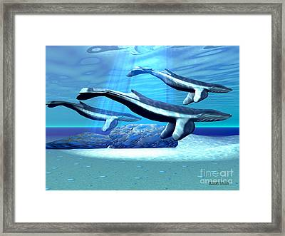 Blue Whale Sanctuary Framed Print by Corey Ford