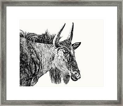 Blue Wildebeest Close-up Framed Print