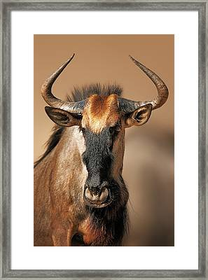 Blue Wildebeest Portrait Framed Print by Johan Swanepoel