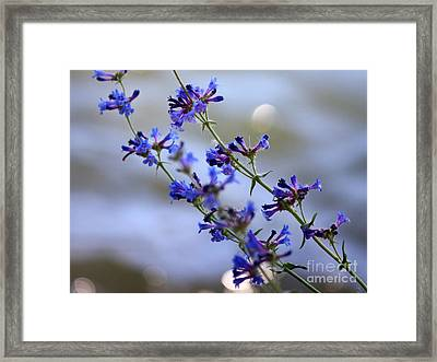 Blue Wildflowers Over Rimrock Lake Framed Print