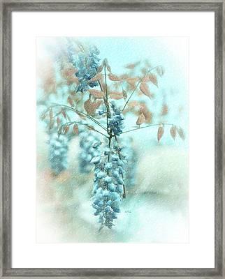Blue Wisteria Framed Print by Angela A Stanton