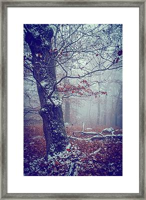 Blue Woods. Mysterious  Framed Print