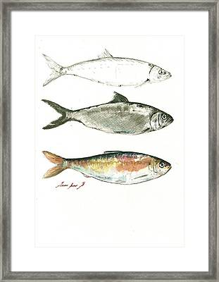 Blueback Herrings Framed Print by Juan Bosco