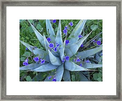 Bluebell And Agave Framed Print