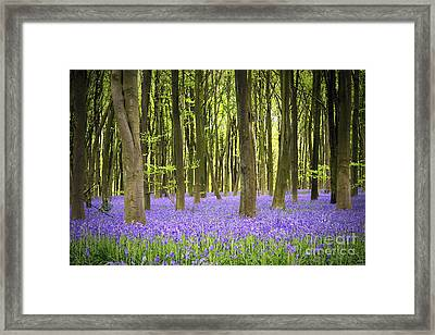 Bluebell Carpet Framed Print