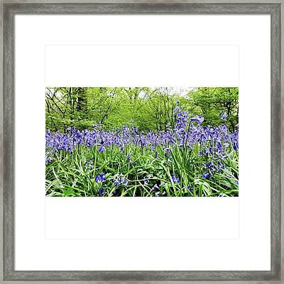 #bluebell #flowers #spring  #woodland Framed Print by Natalie Anne