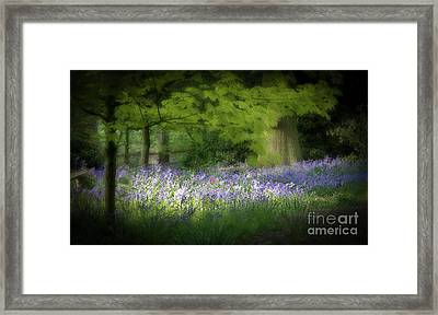 Bluebell Forest Framed Print by Amanda Elwell