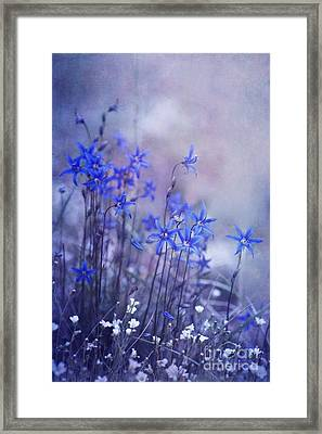 Bluebell Heaven Framed Print by Priska Wettstein