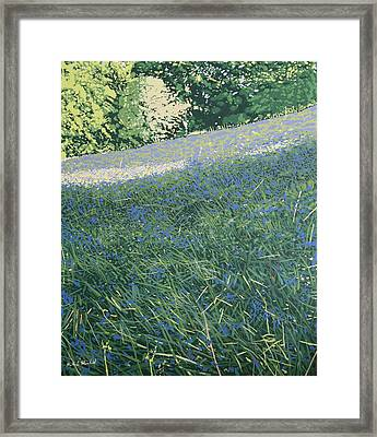 Bluebell Knoll Framed Print by Malcolm Warrilow