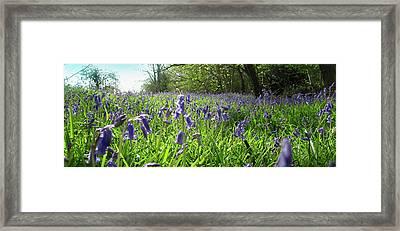 Bluebell Meadow Framed Print