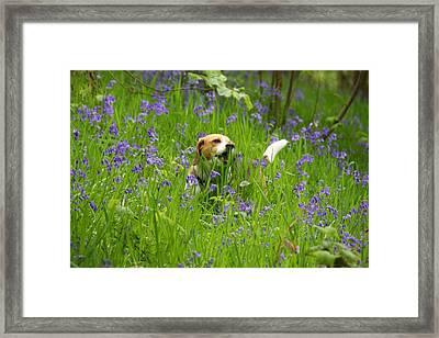 Bluebell Penny Framed Print