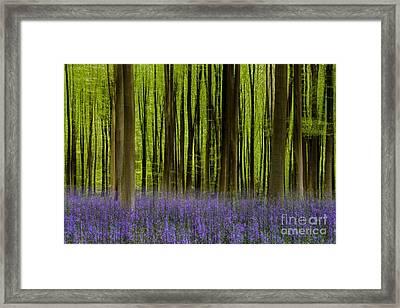 Bluebell Woodland Me Framed Print by Richard Thomas