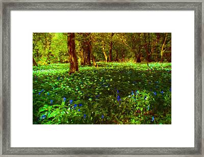 Bluebells And Wood Anemones. Framed Print by ShabbyChic fine art Photography