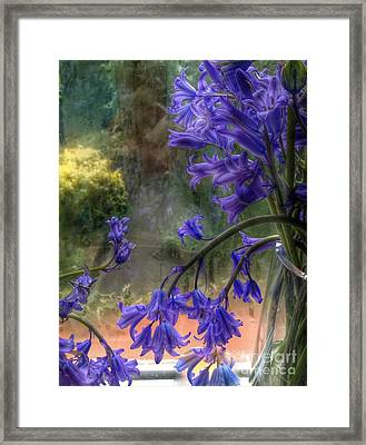 Bluebells In My Garden Window Framed Print
