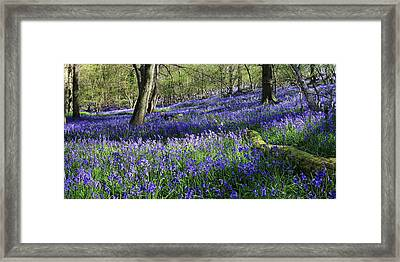 Framed Print featuring the digital art Bluebells by Julian Perry