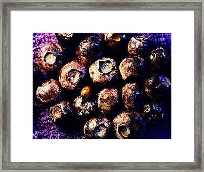 Blueberries And Ladybug Framed Print by Nancy Mueller