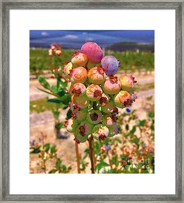 Blueberries Framed Print by Carey Chen