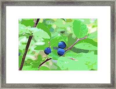 Blueberries Halftone Framed Print by Cathy Mahnke