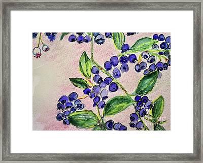 Blueberries Framed Print by Kim Nelson