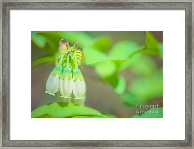 Blueberry Blooms Framed Print