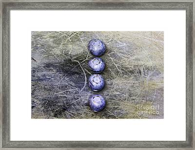 Blueberry Buttons Framed Print by Nina Silver