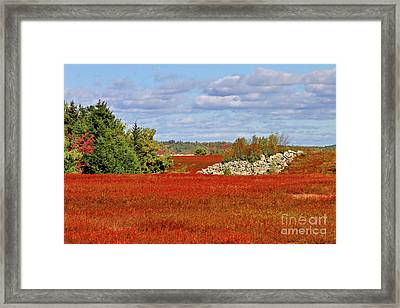 Blueberry Field Framed Print