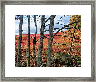 Blueberry Field Through The Wall - Cropped Framed Print