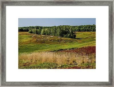 Blueberry Fields Forever Framed Print by Brent L Ander