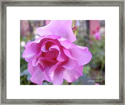 Blueberry Hill 2 Framed Print