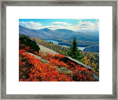 Blueberry Hill Framed Print